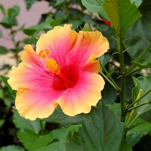 Hoa trồng khuôn viên