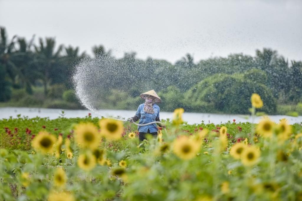 Tưới nước cho hoa