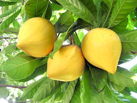 Lê Ki Ma (LêKiMa, Trứng Gà)