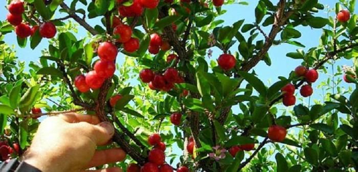 Dịch vụ trồng cung cấp chăm sóc cây xanh