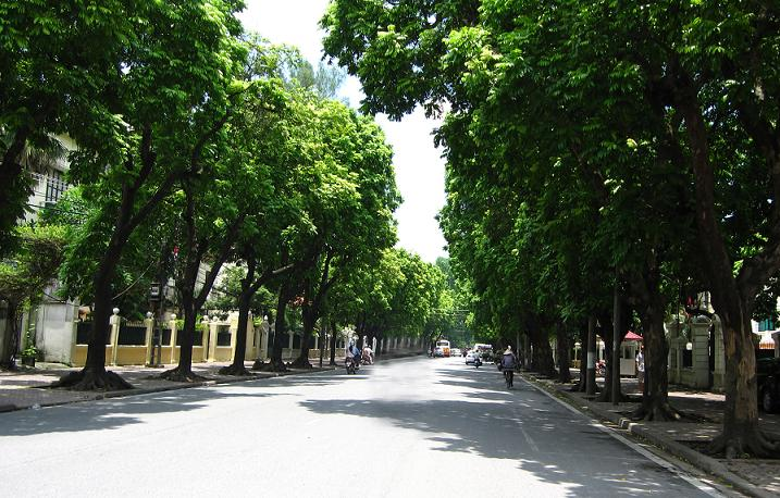 Dịch vụ trồng cây xanh công trình tại Hà Nội