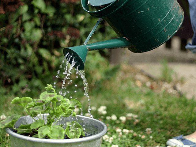 Tưới nước Cách chăm sóc cây xanh