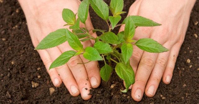 Chăm sóc cây xanh đô thị chuyên nghiệp