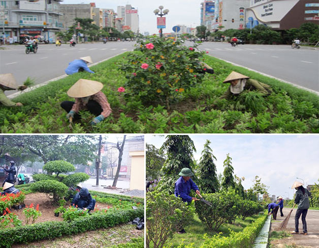 Chăm sóc cây xanh đô thị