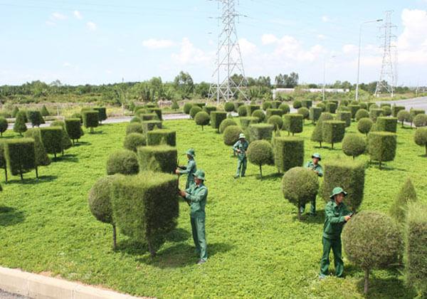 Cắt tỉa cây xanh đô thị