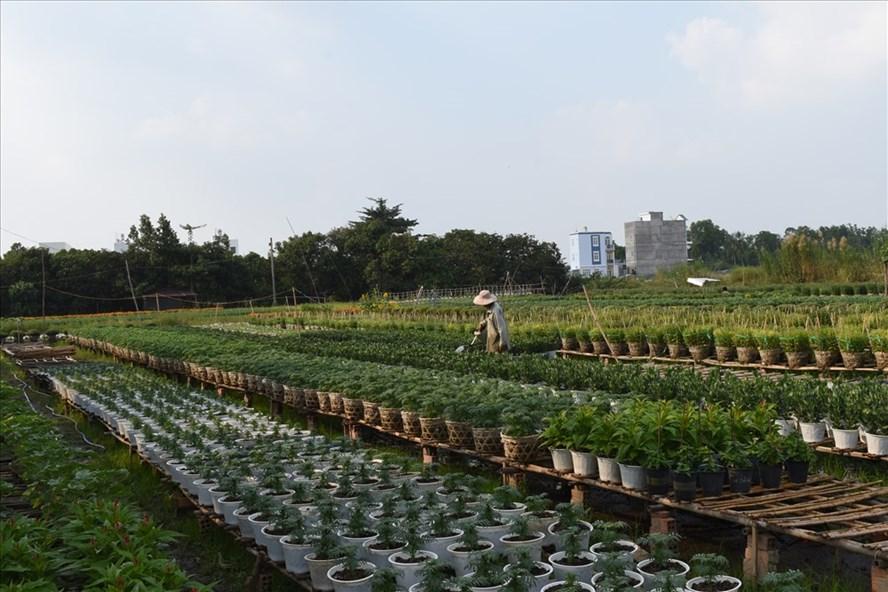 Dịch vụ chăm sóc cây xanh chuyên nghiệp