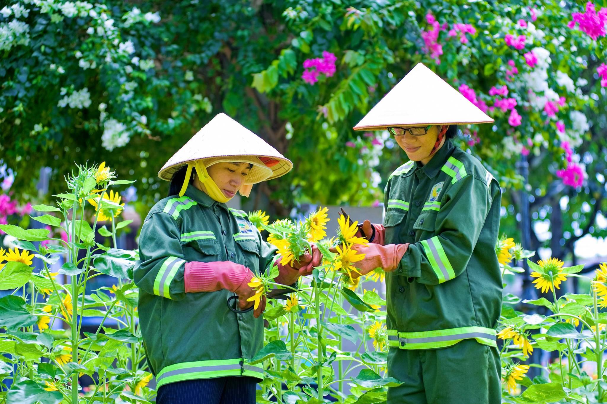 Chăm sóc sân vườn