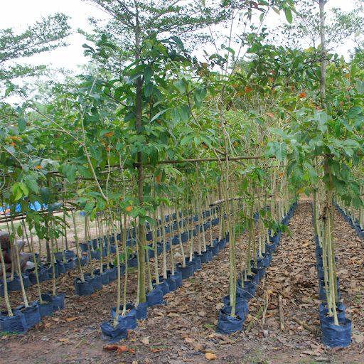 Vườn ươm cây công Trình Nam Định