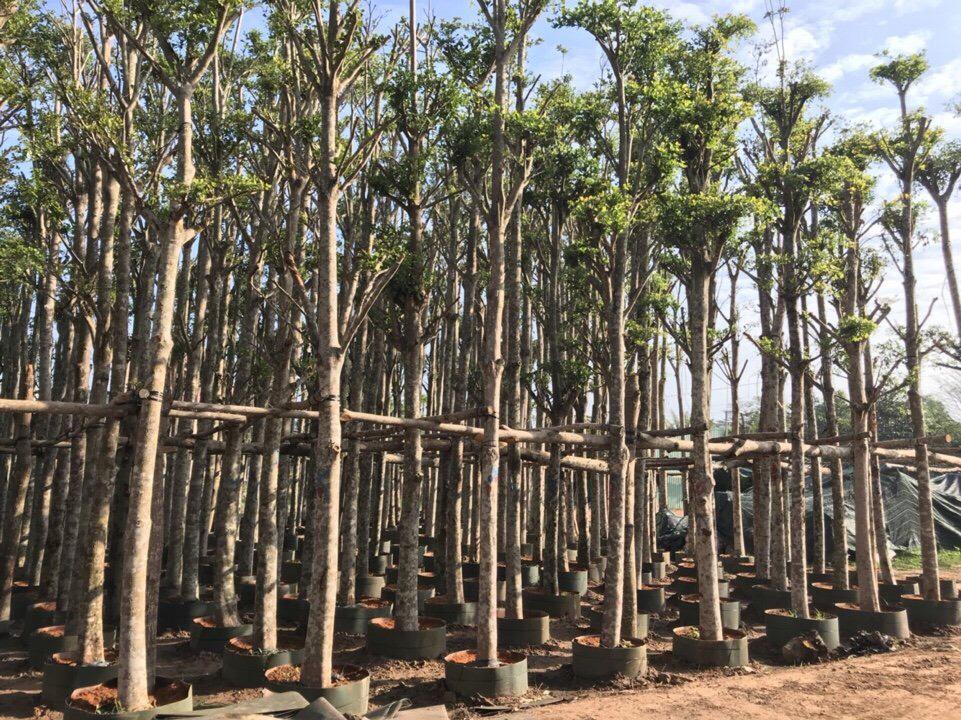 Vườn ươm cây xanh công trình