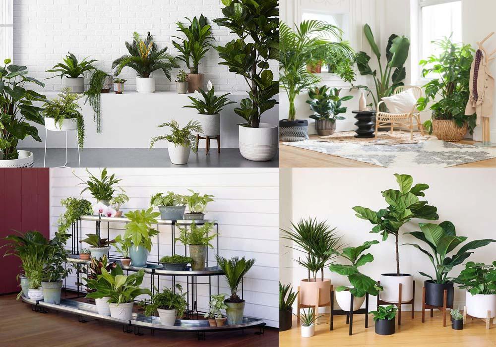 Tư vấn dịch vụ thiết kế, trồng, chăm sóc và cung cấp cây xanh, hoa cảnh