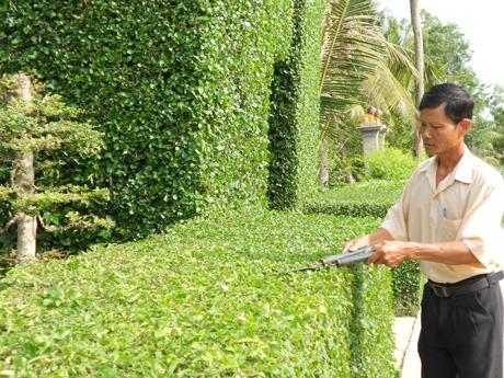 Tổng hợp dịch vụ chăm sóc cây cảnh