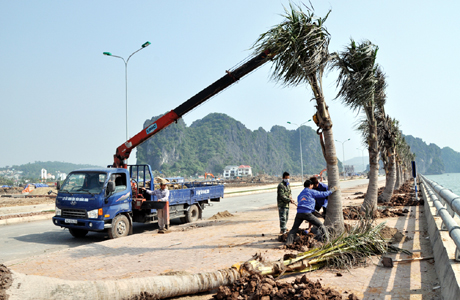 Cung cấp cây xanh công trình