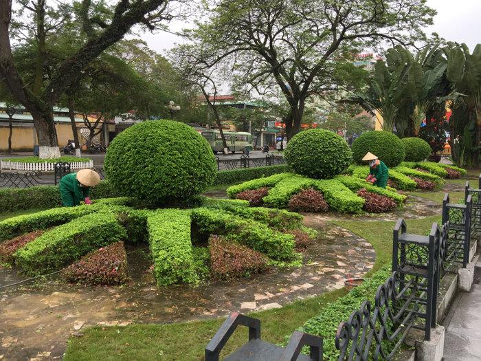 Tổng hợp 3 quy trình chăm sóc cây xanh đô thị
