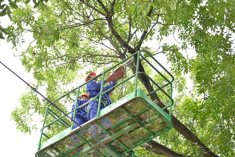 Dịch vụ cắt cành cây chuyên nghiệp