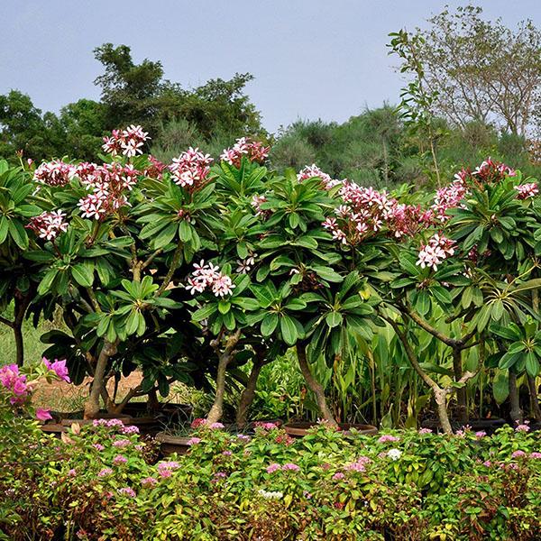 Tư vấn cung cấp cây xanh công trình, hoa hiểu cảnh giá rẻ năm 2021